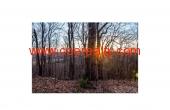 TBD Chestnut Knob Trail
